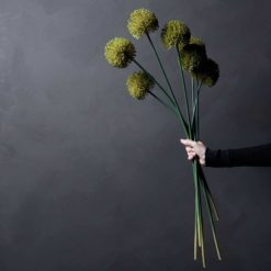 ALLIUM GREEN STEM