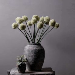 ALLIUM WHITE STEM